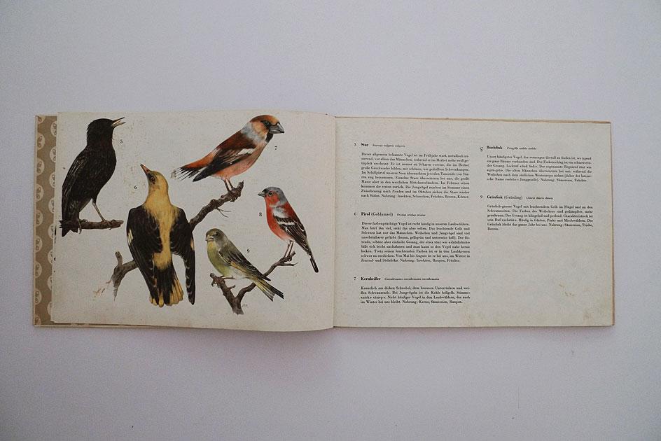 Einheimische Vögel. Band 1
