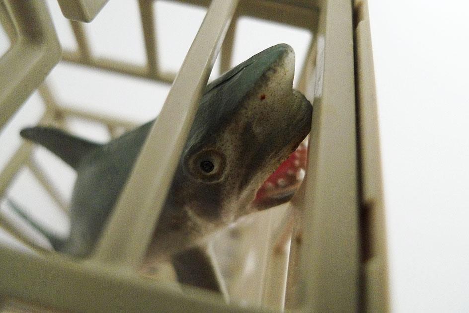 Haifisch im Käfig