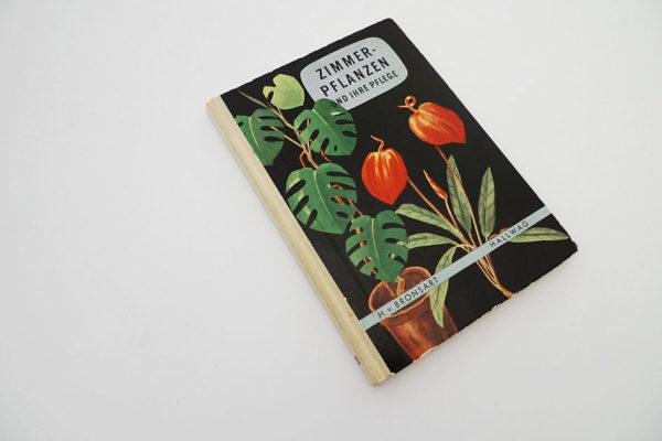 Zimmerpflanzen und ihre Pflege