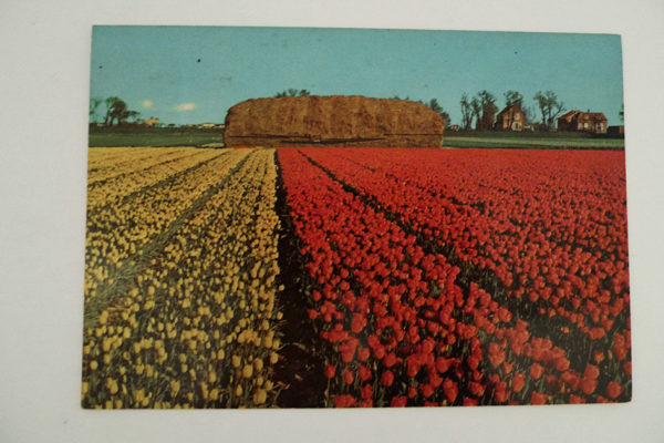 Holland - Blumenland