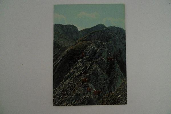Steinwild im Alpstein