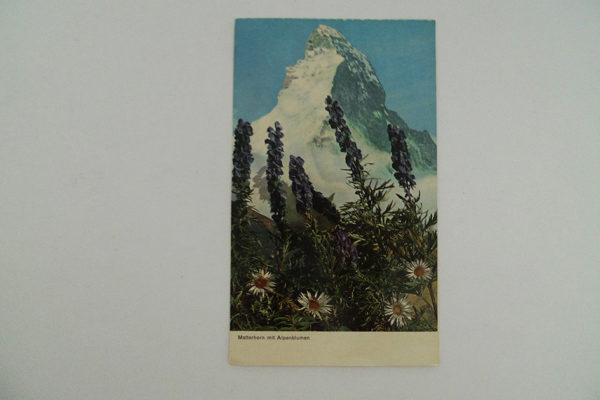 Matterhorn mit Alpenblumen