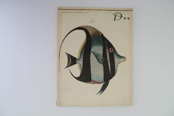 du; Fische