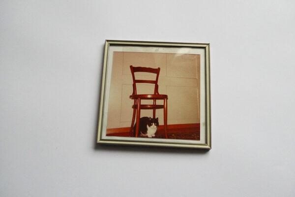 Katze und Stuhl